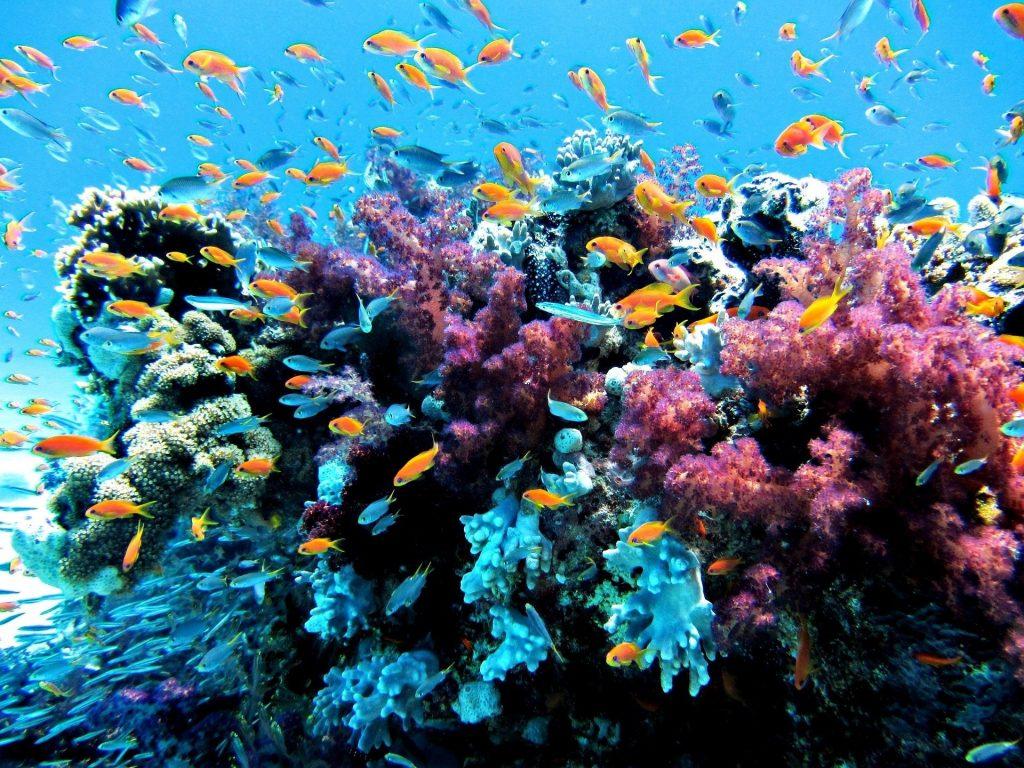 AUSTRALIA: Grande Barriera Corallina